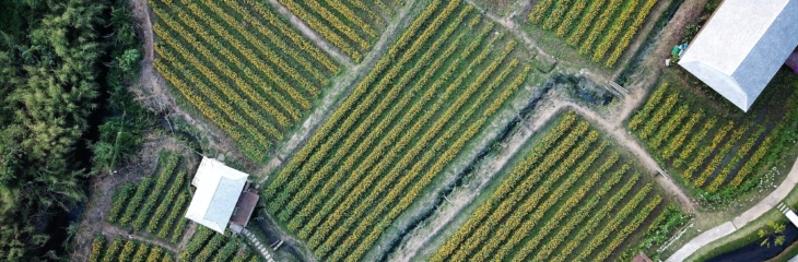 Drone Technology for Agriculture